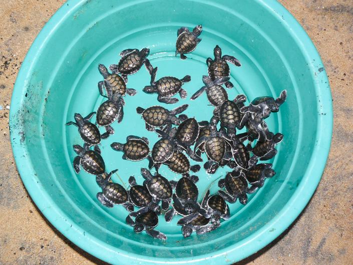 Ein Kübel voll Schildkröten vor dem Tod bewahren